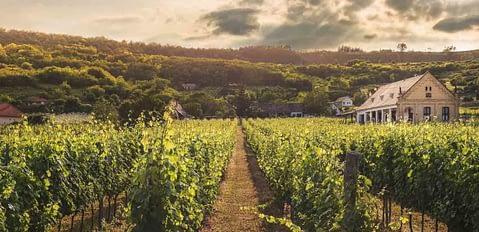 Denominación de Origen Penedès, vino y tierra de calidad